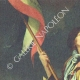 DETAILS  05 | Decree - Louis XVI of France - 1791 - Appointment of officers and enrollment of soldiers | Portrait of singer Simon Chenard in sans-culotte costume (Louis Léopold Boilly)