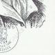 DETAILS  08 | Decree - French Revolution - 1793 - Bankruptcy of the Rohan-Guémené | Portrait of Antoine Barnave (1761-1793)