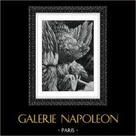 Angel - Seraphim - Seraph Playing of Viola (Mathias Grunewald)
