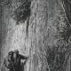 DÉTAILS 02   Fables de La Fontaine - Le Juge Arbitre l'Hospitalier et le Solitaire (Gustave Doré)