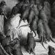 DÉTAILS 03 | Fables de La Fontaine - La Ligue des Rats (Gustave Doré)
