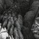 DÉTAILS 05 | Fables de La Fontaine - La Ligue des Rats (Gustave Doré)