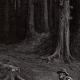 DÉTAILS 05 | Fables de La Fontaine - La Fôret et le Bucheron (Gustave Doré)