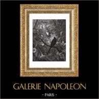 Fables of La Fontaine - Philomel And Progne (Gustave Doré)