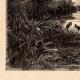 DÉTAILS 02   Vue de Sicile (Italie) - Végétation - Papyrus