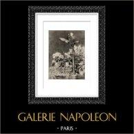 Arums et Plantes de Serre (Auguste Renoir) | Héliogravure originale d'après Auguste Renoir. 1944