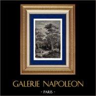 Vue de Arcachon - Forêt - Gironde (France) | Gravure sur bois originale gravée par Best. 1898