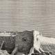 DÉTAILS 03 | Vue de Biskra (Algérie) - Afrique - Zibans - Oasis - Archéologie
