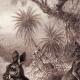 DETAILS 01   Mammals - Eastern Grey Kangaroo - Macropus giganteus