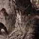DÉTAILS 01   Mammifères - Tamanoir - Fourmilier géant (Myrmecophaga jubata)