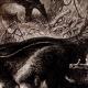DÉTAILS 02   Mammifères - Tamanoir - Fourmilier géant (Myrmecophaga jubata)