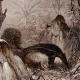 DÉTAILS 04   Mammifères - Tamanoir - Fourmilier géant (Myrmecophaga jubata)