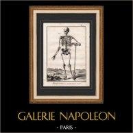 Medicine - Anatomy - 1779 - Skeleton