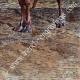 DÉTAILS 06   Vue du Sahara - Désert - Afrique - Touaregs - Nomades pastoraux - Chameaux - Costume Traditionnel