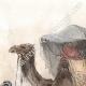DÉTAILS 02 | Chameaux et Dromadaires sellés pour le transport des voyageurs (Egypte)