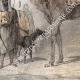 DÉTAILS 04 | Chameaux et Dromadaires sellés pour le transport des voyageurs (Egypte)