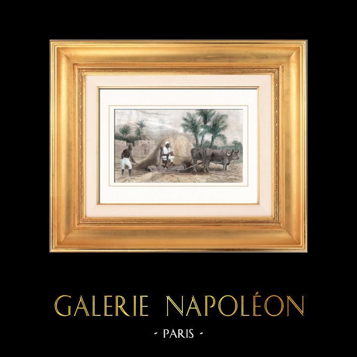 Gravures Anciennes & Dessins   Agriculture - Battage du blé - Noreq (Egypte)   Taille-douce   1848