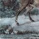 DÉTAILS 04 | Mouflon en Sardaigne (Italie)