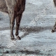 DÉTAILS 05 | Mouflon en Sardaigne (Italie)
