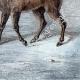 DÉTAILS 06 | Mouflon en Sardaigne (Italie)