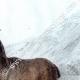 DÉTAILS 07 | Mouflon en Sardaigne (Italie)