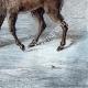 DÉTAILS 08 | Mouflon en Sardaigne (Italie)