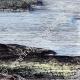DÉTAILS 06   Vue de Eilean Donan castle (Ecosse) - Moyen Age - îIe - Loch Duich - Loch Alsh