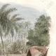 DÉTAILS 04 | Îles Tonga - Kava sur la Plage de Namouka - Scène de Pugilat - Boxeur - Lutteur