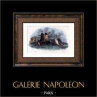 Veduta nei paraggi di Saint-Malo (Ille et Villaine - Francia)   Incisione su acciaio originale disegnata da Ruhierre. Acquerellata a mano. 1838