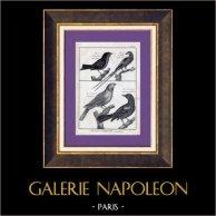 Birds - Grosbeak - Hawfinch - European Roller - Coraciida - Golden Oriole