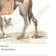 DÉTAILS 05 | Campagne d'Égypte - Empire Ottoman - Armée d'Orient - Mamelouk - Dromadaire - Portraits - Général Desaix (1768-1800) - Mourad Bey (1750-1801)