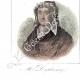 DÉTAILS 07 | Costumes Régionaux Français - Pays de la Loire - Nantes - Portraits - Charles-Alphonse Du Fresnoy (1611-1668) - Jacques Cassard (1679-1740)