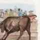 DÉTAILS 03 | Tauromachie - Torero - Matador - Portraits - De Prez de Crassier  (1733-1803) - Joseph Servan (1741-1808)
