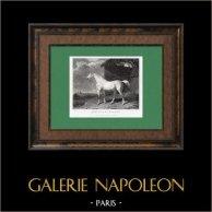 Racehorse - Arbutus door Walton