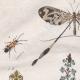 DÉTAILS 01 | Insectes - Némestrine - Némognathe - Némoptère - Nèpe - Népenthe