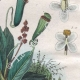 DÉTAILS 05 | Insectes - Némestrine - Némognathe - Némoptère - Nèpe - Népenthe