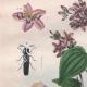 DÉTAILS 02 | Mollusques - Insectes - Fleurs - Mélastome - Melanopside - Mélanies - Melasis