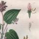 DÉTAILS 04 | Mollusques - Insectes - Fleurs - Mélastome - Melanopside - Mélanies - Melasis