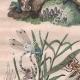 DETAILS 02 | Insects - Dragonflies - Lichen - Mushroom