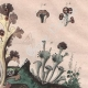 DETAILS 03 | Insects - Dragonflies - Lichen - Mushroom
