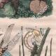 DETAILS 04 | Insects - Dragonflies - Lichen - Mushroom