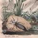 DETAILS 05 | Insects - Dragonflies - Lichen - Mushroom