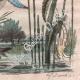 DETAILS 06 | Insects - Dragonflies - Lichen - Mushroom