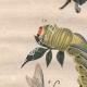 DETAILS 02 | Caterpillar - Butterfly - Sphingidae
