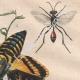 DETAILS 04 | Caterpillar - Butterfly - Sphingidae