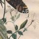 DETAILS 05 | Caterpillar - Butterfly - Sphingidae