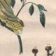 DETAILS 06 | Caterpillar - Butterfly - Sphingidae