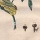 DETAILS 08 | Caterpillar - Butterfly - Sphingidae