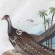 DETAILS 01 | Bird - Crab - Mushroom - Lycoperdon - Argus - Lupee