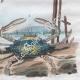 DETAILS 06 | Bird - Crab - Mushroom - Lycoperdon - Argus - Lupee